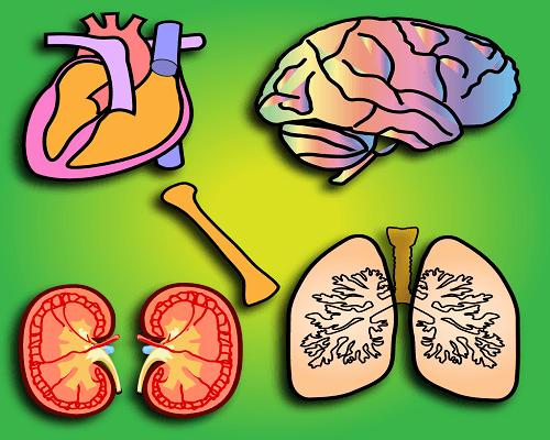 Beneficios del silicio en nuestros órganos