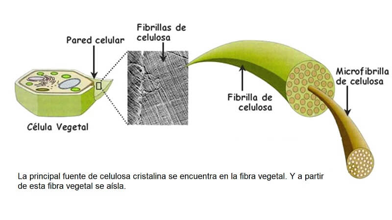 celulosa vegetal