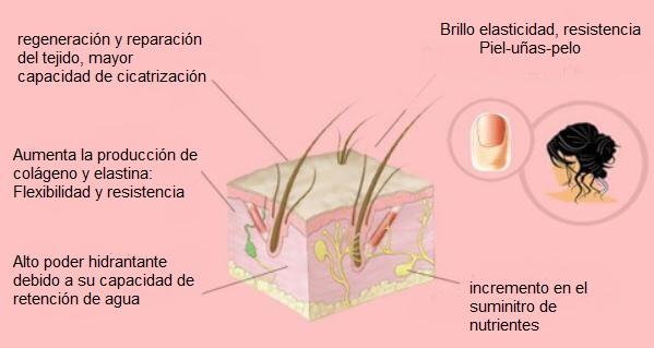 silicio orgánico en piel