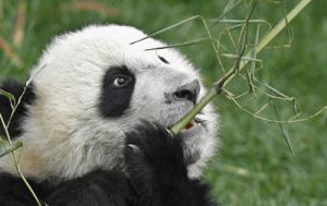 silicio y bambu