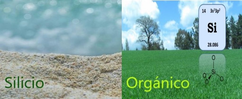 Silicio orgánico en nuestra naturaleza